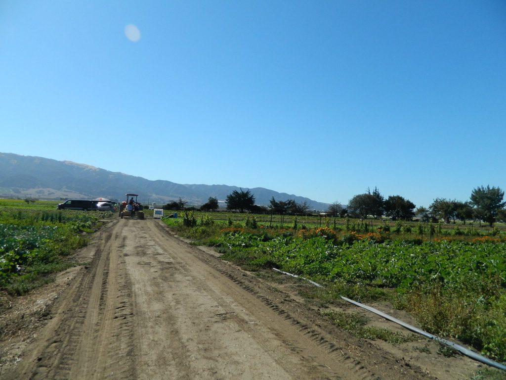 ALBA Farm